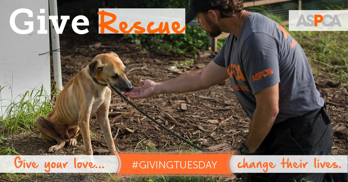 Donate to the ASPCA to help Animals in the California Wildfires this Giving Tuesday