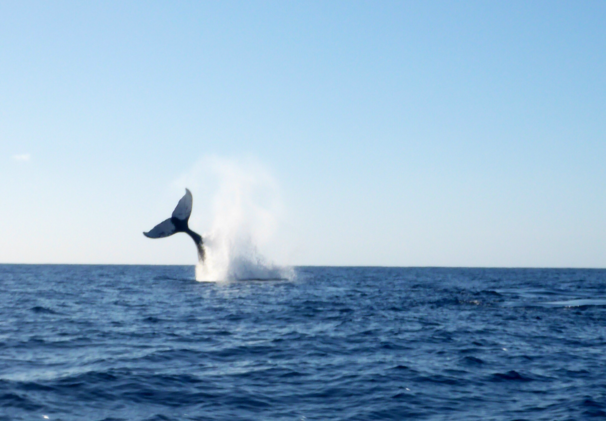 7 Adult and Couples Things to Do in San Diego - whale watching