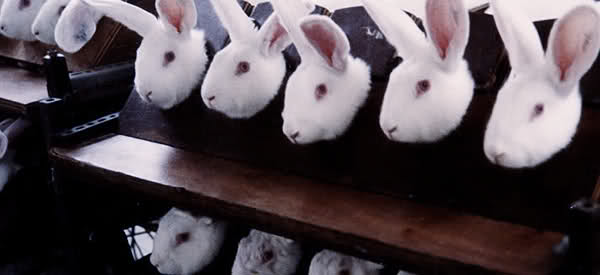 how to know if a product is tested on animals